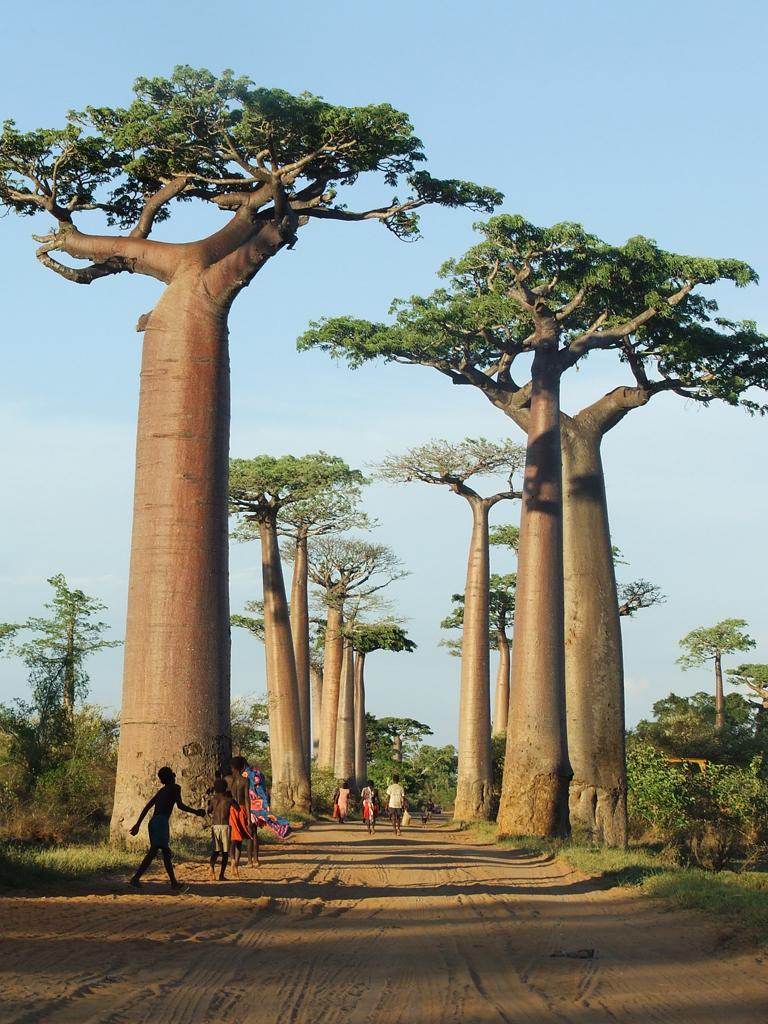 Baobab-estudio-interiorismo